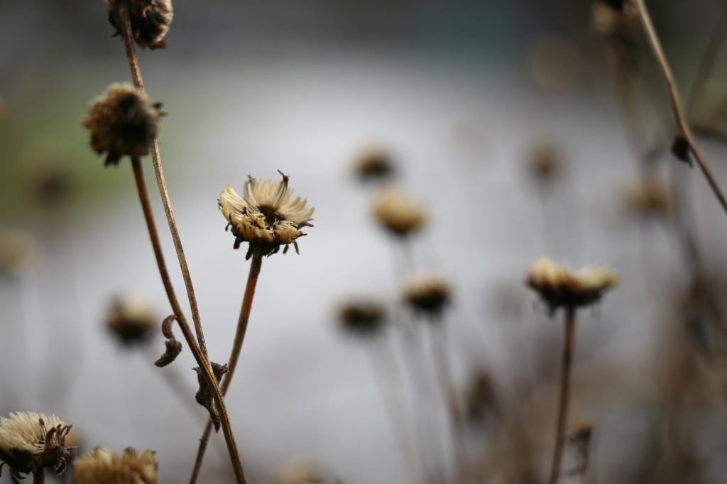 winter flowers2 2014