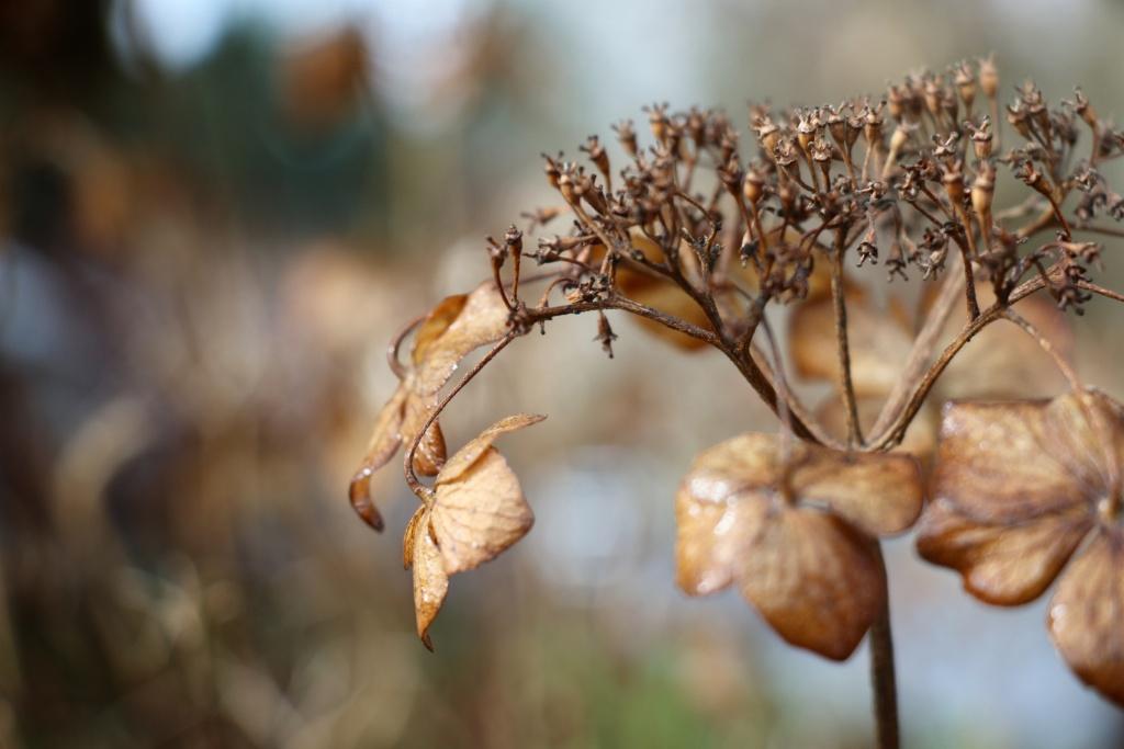 winter flowers2 sml