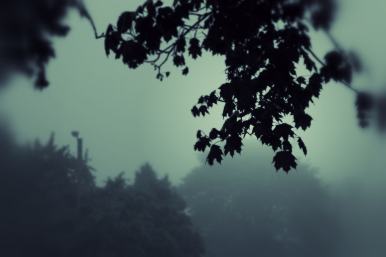 foggy am3