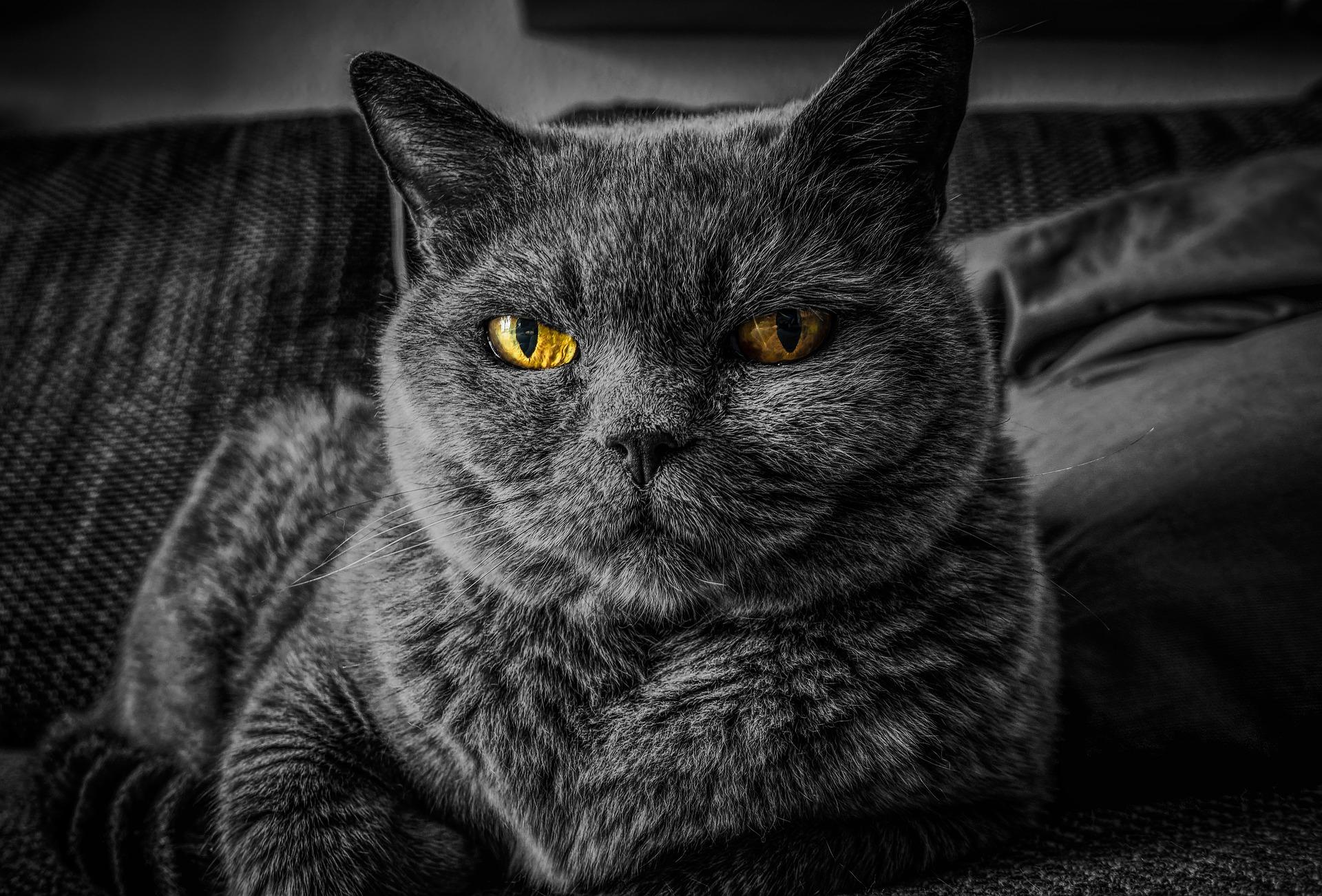 cat-2143332_1920